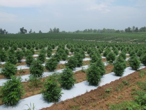 Tobacco farmers only earn the equivalent of about 4 cents per pack of cigarettes. It's still uncertain how much revenue hemp will bring into Kentucky's agriculture business but the farming community is hopeful. JESSICA FIRGER FOR NEWSWEEK