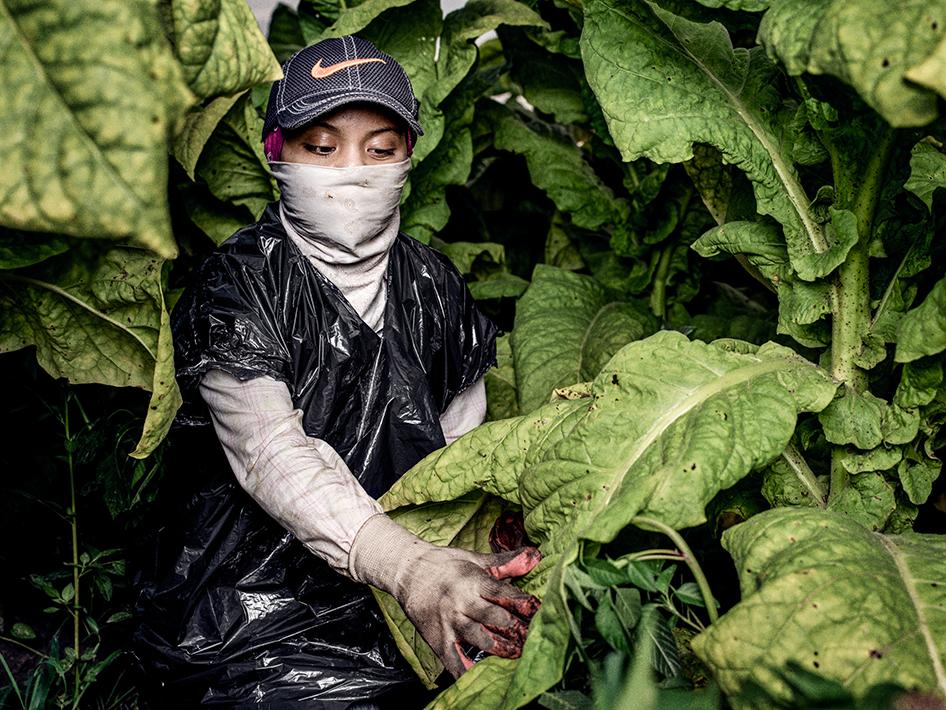 """""""Sofia,"""" a 17-year-old tobacco worker, in a tobacco field in North Carolina. She started working at 13, and she said her mother was the only one who taught her how to protect herself in the fields: """"None of my bosses or contractors or crew leaders have ever told us anything about pesticides and how we can protect ourselves from them….When I worked with my mom, she would take care of me, and she would like always make sure I was okay.…Our bosses don't give us anything except for our checks. That's it."""""""