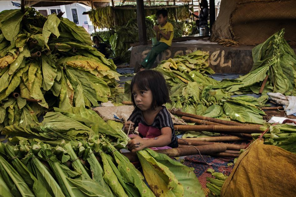A young girl ties tobacco leaves onto sticks to prepare them for curing in East Lombok, West Nusa Tenggara. © 2015 Marcus Bleasdale for Human Rights Watch
