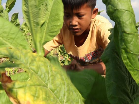 201605hrw_indonesia_tobacco