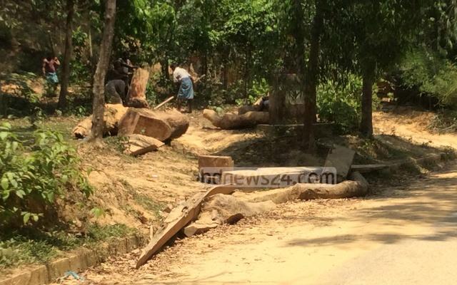 chakaria-tree-cutting