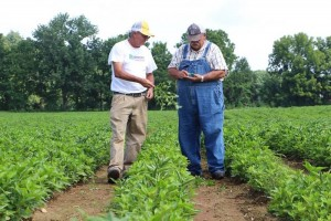 On one summer morning, David Fulton, left, and Larry Williams inspect a sprig of an indigo plant in Fulton's field.