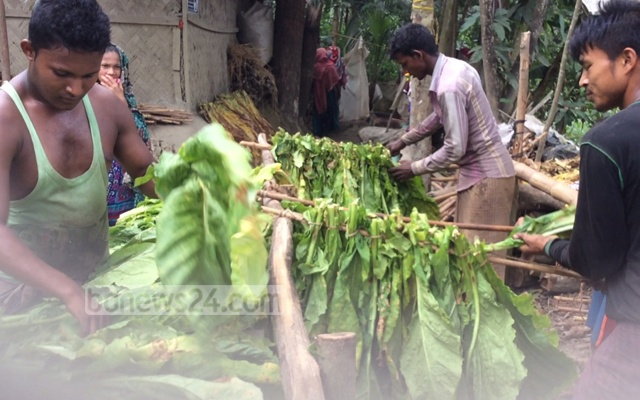 tobacco-processing